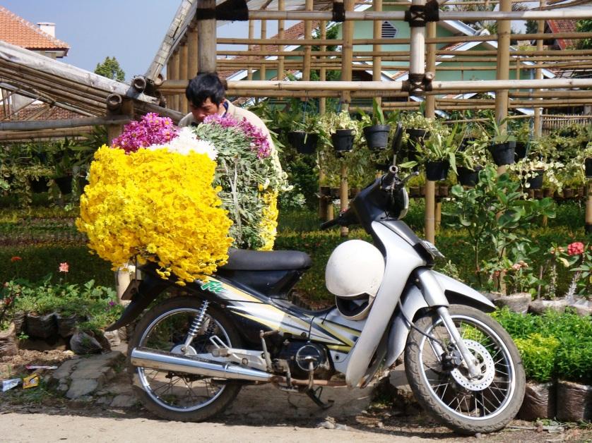 Pflanzenmarkt Bandung