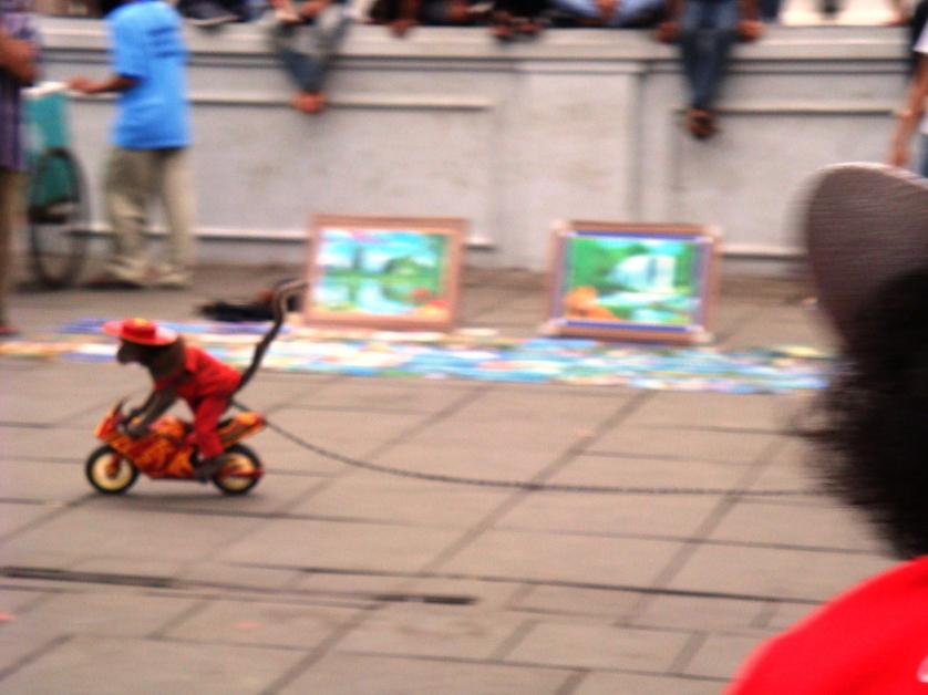 Aeffchen in Jakarta