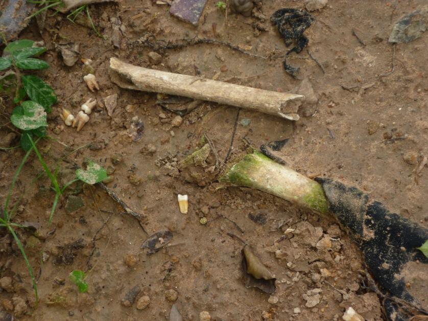 Killing Field Choeung Ek, Phnom Penh