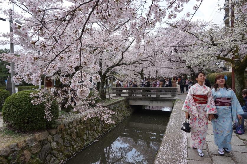 Kyoto, Sakura, Philosophers Path